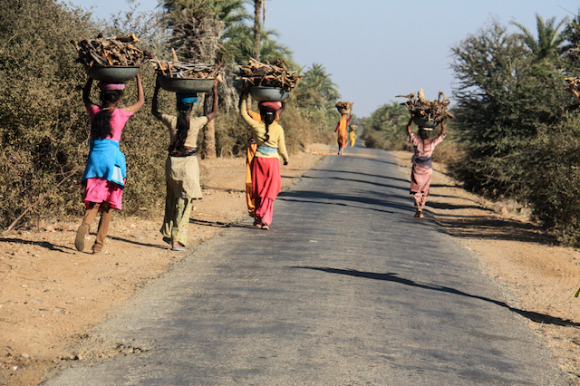 Women-of-India-collect-and-carry-fire-wood-on-their-head-and-carry-home-