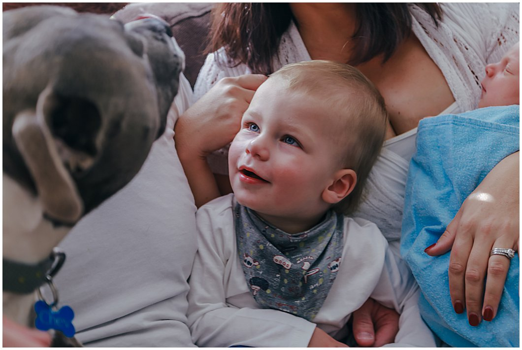 toddler-being-cuddled-between-mum-and-dad-watching-energetic-dog-lick-dads face-gold-coast-family-photography