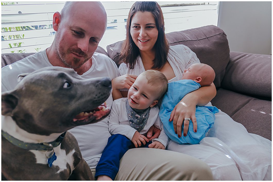 family-dog-looks-wearily-on-as-toddler-looks-for-cuddles-gold-cost-newborn-and-family-documentary-photography