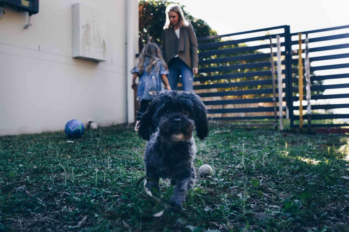 Daisy-the-dog-palying-soccer-in-the-yard-gold-coast-family-documentary-photography