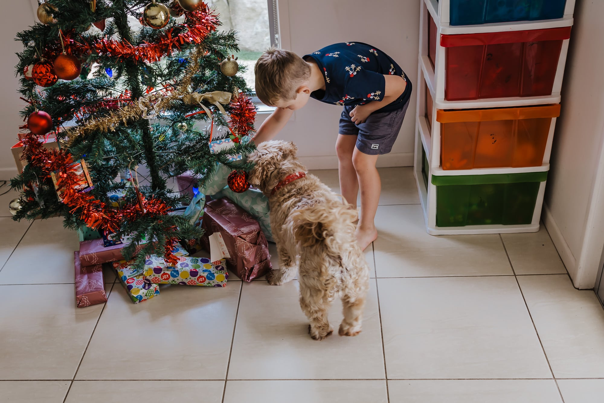 a young boy shows his pet dog the present under the tree and in particular the dog present