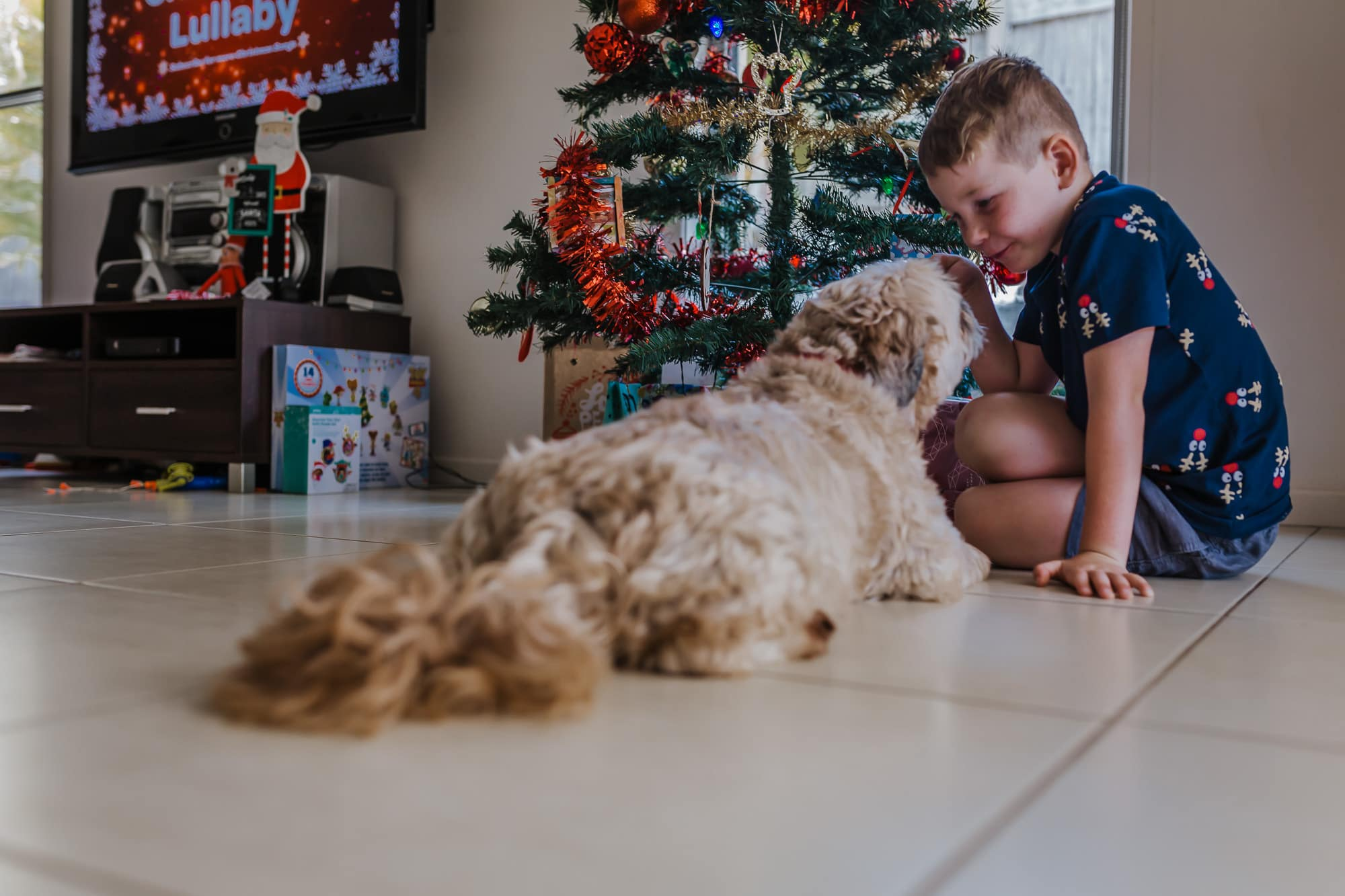 a boy and his dog excited sitting in front of the Christmas tree with all the present underneath